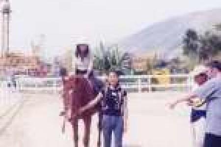 騎馬活動1999